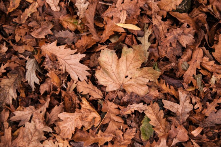 """10 Great Versions of Jazz Standard """"Autumn Leaves"""""""